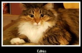 Katniss 2016