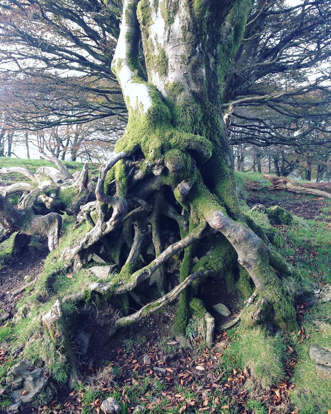 Trees hugging